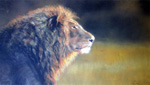 Tracey Wood pastel of a lion